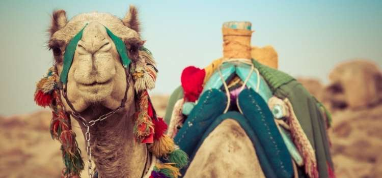 Vaccinations for travel to Egypt