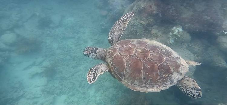 Snorkelling is a great activity to do in the Whitsundays