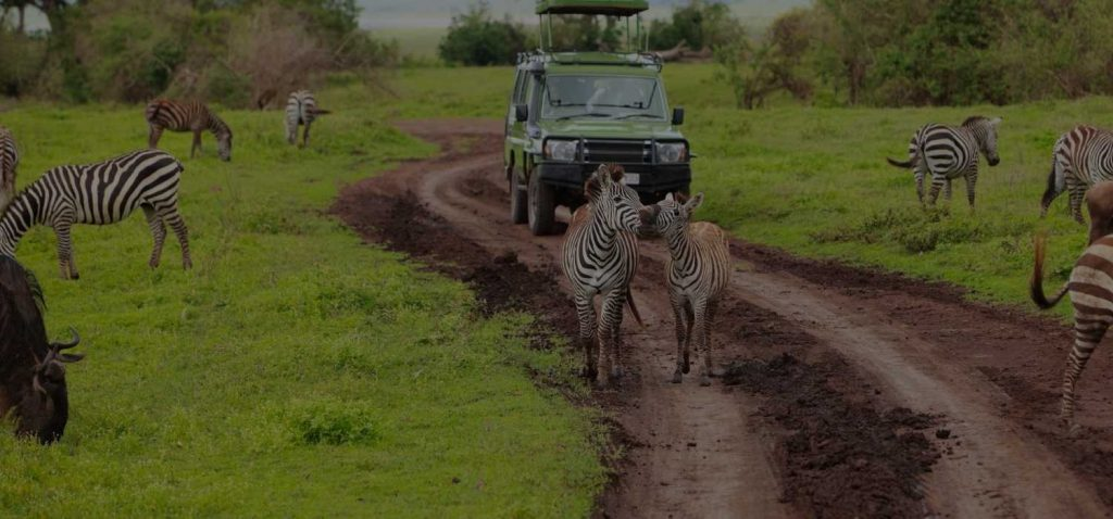 Best National Parks for Safari Drives - South Africa