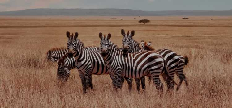 A Solo Traveller's Guide to the Serengeti National Par