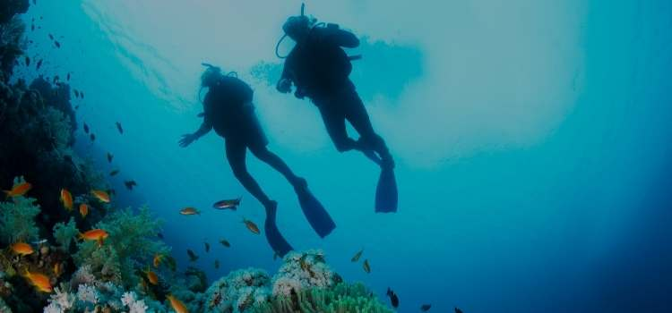An Overview to Scuba Diving For Beginners
