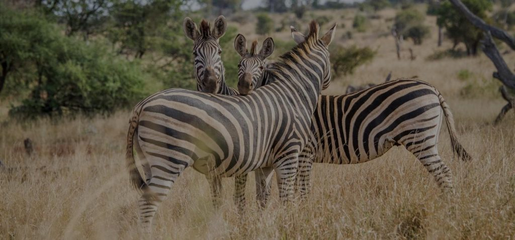 A Beginner's Guide to Kruger National Park (Getting there from Johannesburg)