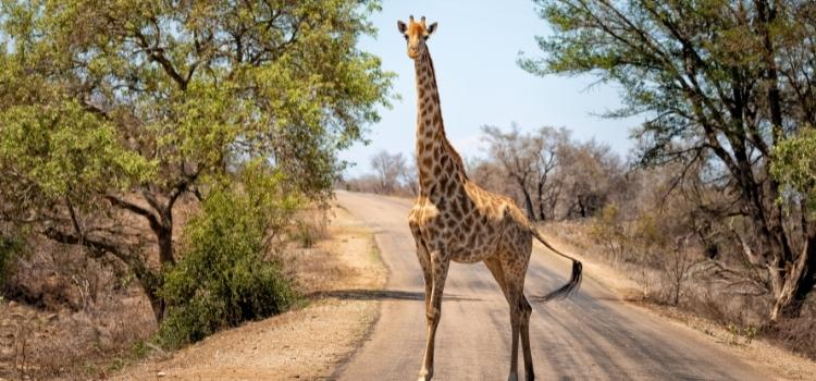Getting to Kruger National Park from Johannesburg