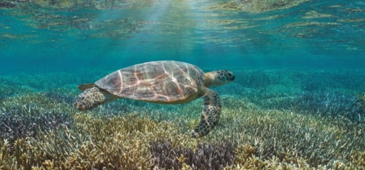 Go swimming with turtles at Coral Bay