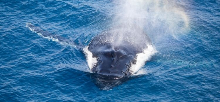 Go whale watching in Coral Bay